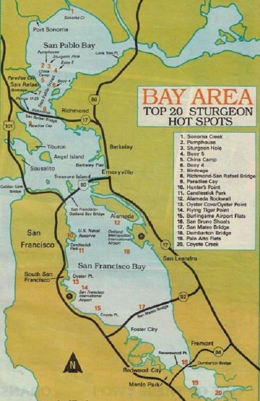 How to fish SF bay, sf bay sturgeon